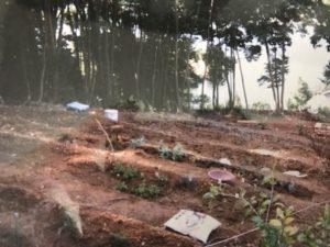 店の裏山の畑作り